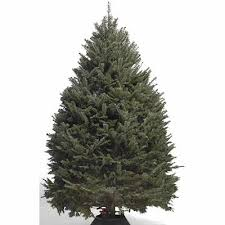 Best Smelling Christmas Tree Types by Types Of Real Christmas Trees The Home Depot