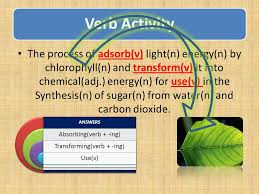 Light Verb by Noun Verb Activity The Process Of Adsorb V Light N Energy N By