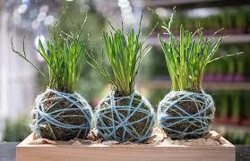 zimmerpflanzen ohne topf aufhängen