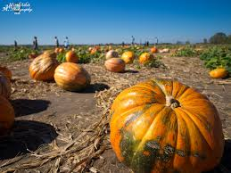 Lawrence Pumpkin Patch by The World U0027s Best Photos Of Kansas And Patch Flickr Hive Mind