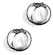 31 Dessins De Coloriage Tomate à Imprimer
