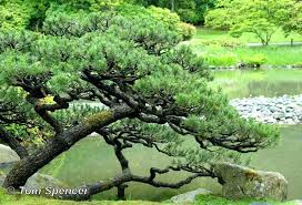 Pinetree Garden Seeds Review Landscaping Under Pine Trees Creating