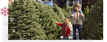 A Father Helping His Children Pick Out Christmas Tree