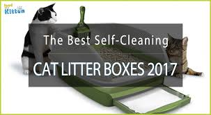best cat litter boxes the 10 best self cleaning litter box 2017 and ultimate guide