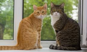 cat in house how to stop your cat from spraying urine in the house care2