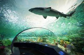 aquarium geant a visiter belgique six destinations incontournables à visiter cet été the coca cola