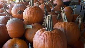 Sarasota Pumpkin Festival by Anna Maria Island Pumpkin Festival At Hunsader Farms