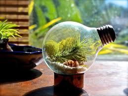 garden ideas daffodil bulbs plants from bulbs bulbs to