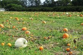 Nearest Pumpkin Patch Shop by Pumpkin Patch Guide For Richmond U0026 Beyond Richmond Mom