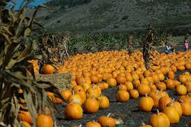 Half Moon Bay Glass Pumpkin Patch by Have You Carved Your Pumpkin Yet Get Fit Now Fitness Studio