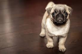 10 ways to deal with dogs on wood floors advice from a hardwood