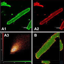 The Protein Disulfide Isomerase Gene Family In Bread Wheat T