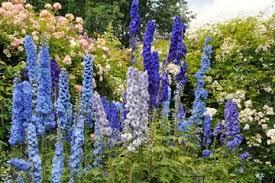 The Best Alaska Botanical Garden Tours Trips & Tickets