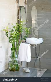 Best Plants For Bathroom Feng Shui by Plants Bamboo Plant In Bathroom Inspirations Bamboo Plant In