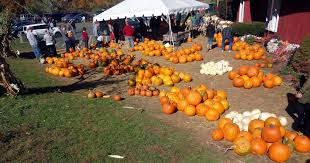Pumpkin Patch Massachusetts by Pumpkin Patch Corn Maze U0026 Hayrides At Lyman Orchards In