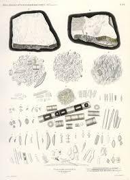 100 24 Casa Mk Index Of EhrenbergEhrother Lit ScansE Mikrogeologie 1854