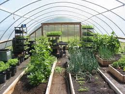 Local Grower Spotlight: Barnes Farms | Wayne Food Initiative Green Gold Modern Washington Dc Wedding Dc The Thames Path Putney Richmond Barnes Museum And The Art Of Roof Roofmeadow Kansas Wikipedia Padmore Ltd Willow M387 Smoky Mountain Cemetery Creeping Bnesundatmerionformalgarden Coquette Birmingham Botanical Gardens 481 Run Rd Sandyville Sold Sisters Realty 55740 Peach Court Wi 54873 Mls 1513125 Edina 3404 Ne For Sale Prineville Or Trulia