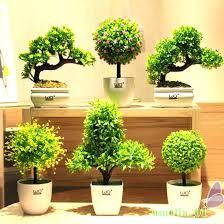 plantes pour bureau plantes vertes pour bureau plante a fleur interieur maison plantes