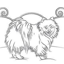 Irish Setter Dog Breed Profile Pomeranian Coloring Page