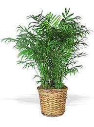 plante verte dans une chambre à coucher plante verte chambre a coucher irstan