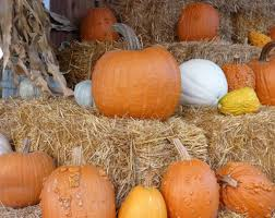 Pumpkin Patch Columbus 2015 by Fishkill Farms Apple Orchard Pick Your Own Apples Diversified
