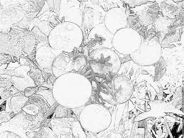 Cartoon Tomate à Colorer Livre Coloriage Pour Les Enfants Clip Art