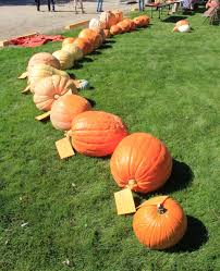 Largest Pumpkin Contest Winners by 900 Pound Pumpkin Takes Top Prize At The Goshen County Giant