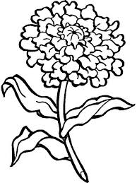 Carnation Flower Coloring Pages 10