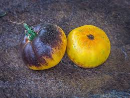 Kernel Toms Pumpkin Patch Moorpark Ca by 15065 Best Gardening Images On Pinterest Barbecue Grill