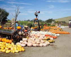 El Paso Pumpkin Patch by Chesebrough Farm