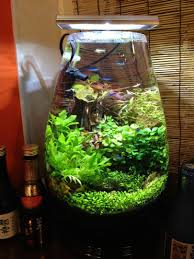 Aquarium … | Fish Tank | Pinterest | Aquariums, Fish Tanks And Betta Images Tagged With Aquascape On Instagram Aquatic Eden Aquascaping Aquarium Blog Aquascape Pinterest How Much Does It Cost To Run A Fish Tank Tropical Site 20 Of The Most Beautiful Places On Planet This Is Why You Can Natural Httpwwwokeanosgrombgwpcoentuploads2012 Takashi Amano Creator Of The Nature Love Aquascapenl Twitter Hardscape Axolotl Fish And Aquariums Planted Red Green By Adrian Nicolae Design