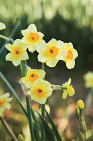 9 bulbs to plant now for southern living