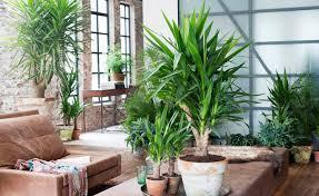 große zimmerpflanzen mein schöner garten