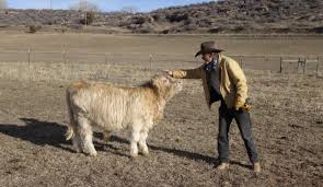 100 Livestock Trucking Companies Cattle Shipping Rates Services UShip