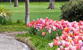 dos don ts and 6 tips for planting bulbs smart tips