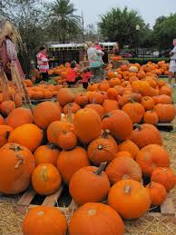 Pumpkin Patch Tampa by Pumpkins And Fun Are As Close As First United Methodist Church Of