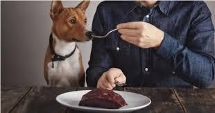 cette start up vend de la nourriture pour chien si saine que même