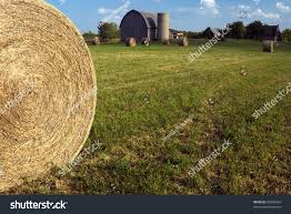 Large Round Bales Hay Accent Scene Stock Photo 68530834 - Shutterstock Old Barn Scene In Western Russia Rustic Farm Building Free Images Wood Tractor Farm Vintage Antique Wagon Retro With Silver Frame Urbamericana G Poljainec Acrylic Pating Winter Of Yard Photo Collection Download The Stock Photos Country Old Barn Wallpaper Surreal Scene Dance Charlotte Joan Stnberg Art Scene Unreal Engine Forums