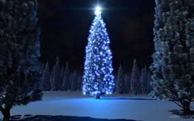 Bellevue Singing Christmas Tree by Beautiful Christmas Trees And Starlight Photo Gallery Hd Wallpaper