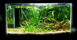 desk l the planted tank forum