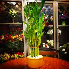 Lucky Bamboo in Cherry Hill NJ