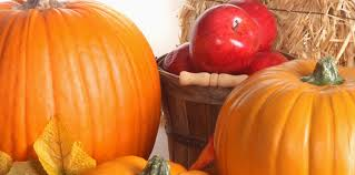 Pumpkin Farms In Channahon Illinois by The Best Apple Orchards And Pumpkin Patches