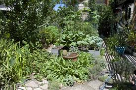 and best winter ve able garden southern california ing images on