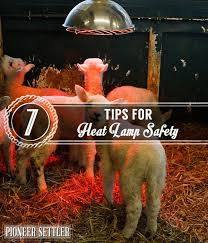 Reptile Heat Lamps Safety by Best 25 Outdoor Heat Lamp Ideas On Pinterest Tin Diy Upcycled