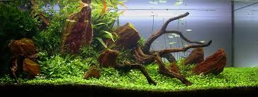 Naturaquarium Einrichten - Google-Suche | Fish-Tank | Pinterest ... Images Tagged With Aquascape On Instagram Aquatic Eden Aquascaping Aquarium Blog Aquascape Pinterest How Much Does It Cost To Run A Fish Tank Tropical Site 20 Of The Most Beautiful Places On Planet This Is Why You Can Natural Httpwwwokeanosgrombgwpcoentuploads2012 Takashi Amano Creator Of The Nature Love Aquascapenl Twitter Hardscape Axolotl Fish And Aquariums Planted Red Green By Adrian Nicolae Design
