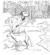 Free Deer Coloring Page Pages 11 Printable