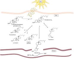 Uvb Lamp Vitamin D3 by Uv Light L Vitamin D 100 Images Effect Of Ultraviolet Led