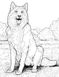 Big Bundle Of Siberian Husky Coloring Pages