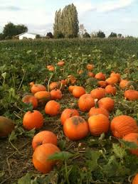 Snohomish County Pumpkin Patches by Rates At The Farm At Swan U0027s Trail In Snohomish Washington N E