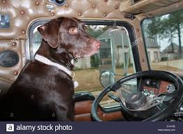 Dog Driving Truck Dog Behind Stock Photos & Dog Driving Truck Dog ... Hot Dog Of A Food Truck Pays Off For Monroe Fatherson Duo Driver In Arizona Forgets Leashed To Famous Dog Ramp For Truck Ideas Bravasdogs Home Blog The Best Is It Legal Put The Back Pickup Treat East Greenbush Albany Ny Mugzys Barkery Traveling With Your Pet This Holiday Part 4 Mckinney Animal Driving Lorry Stock Photos Images Alamy Crate Pickup N Treats Free Window Cute Canine Transportation Waiting Love Like A Truckin Farmer And Near Photo Getty Why You Shouldnt Let Your Ride Back One